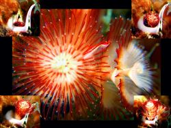 I put together a collage of a Christmas tree worm unfurli... by Zaid Fadul 